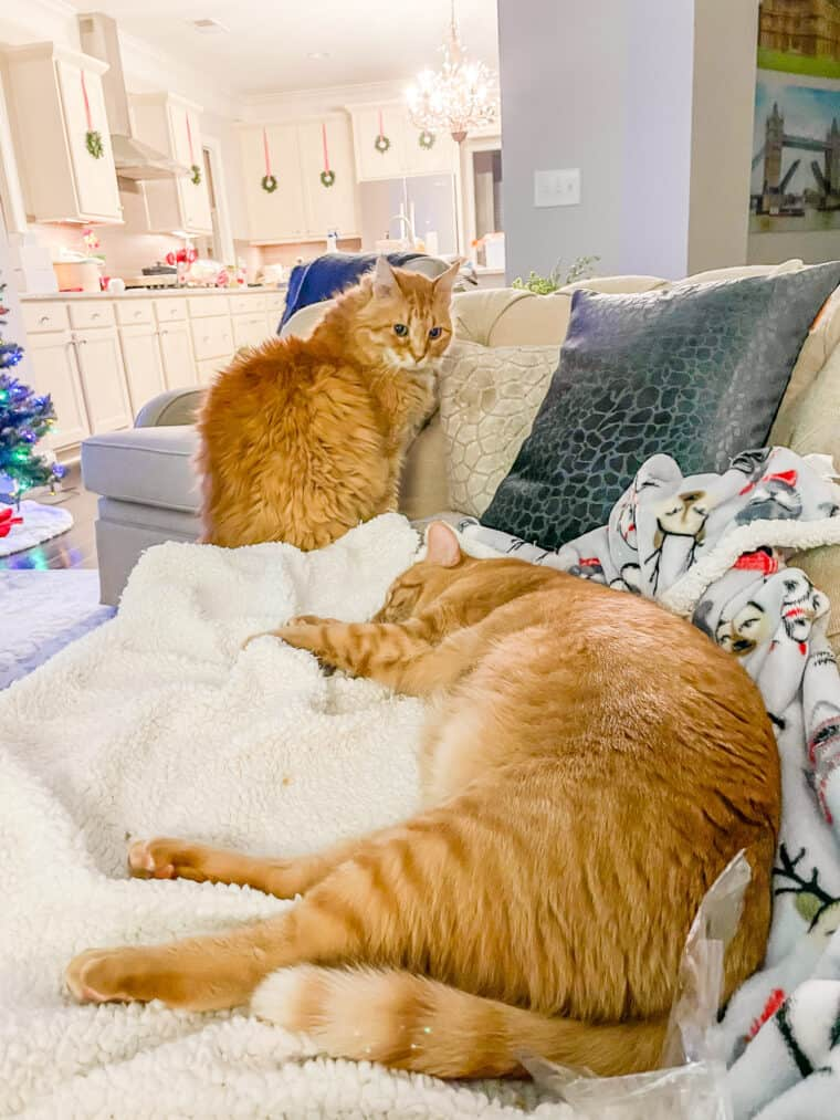 2 cats laying on a blanket