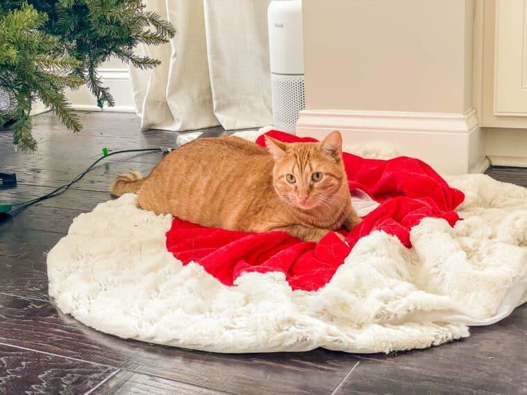 orange cat in christmas tree skirt