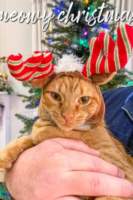 orange cat in antlers in front of the christmas tree