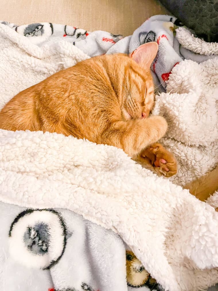 orange cat sleeping in a blanket