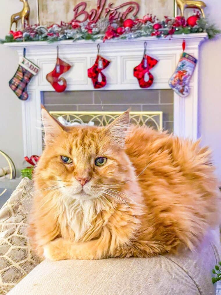 orange cat sitting on sofa arm with christmas mantle behind it