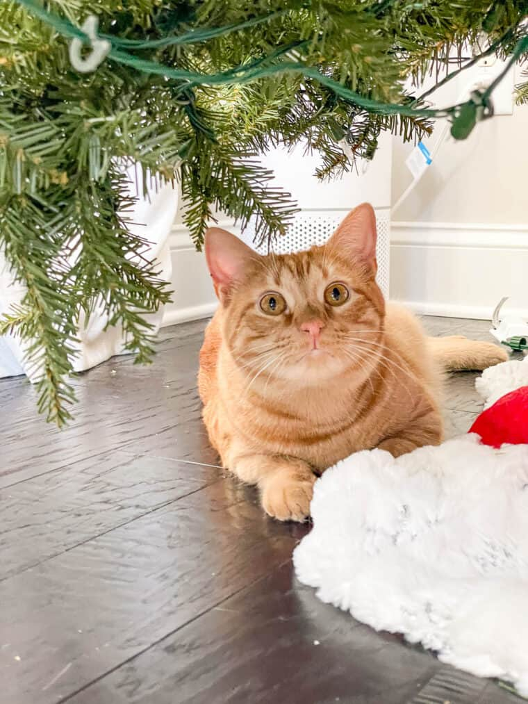 orange cat sitting under the christmas tree