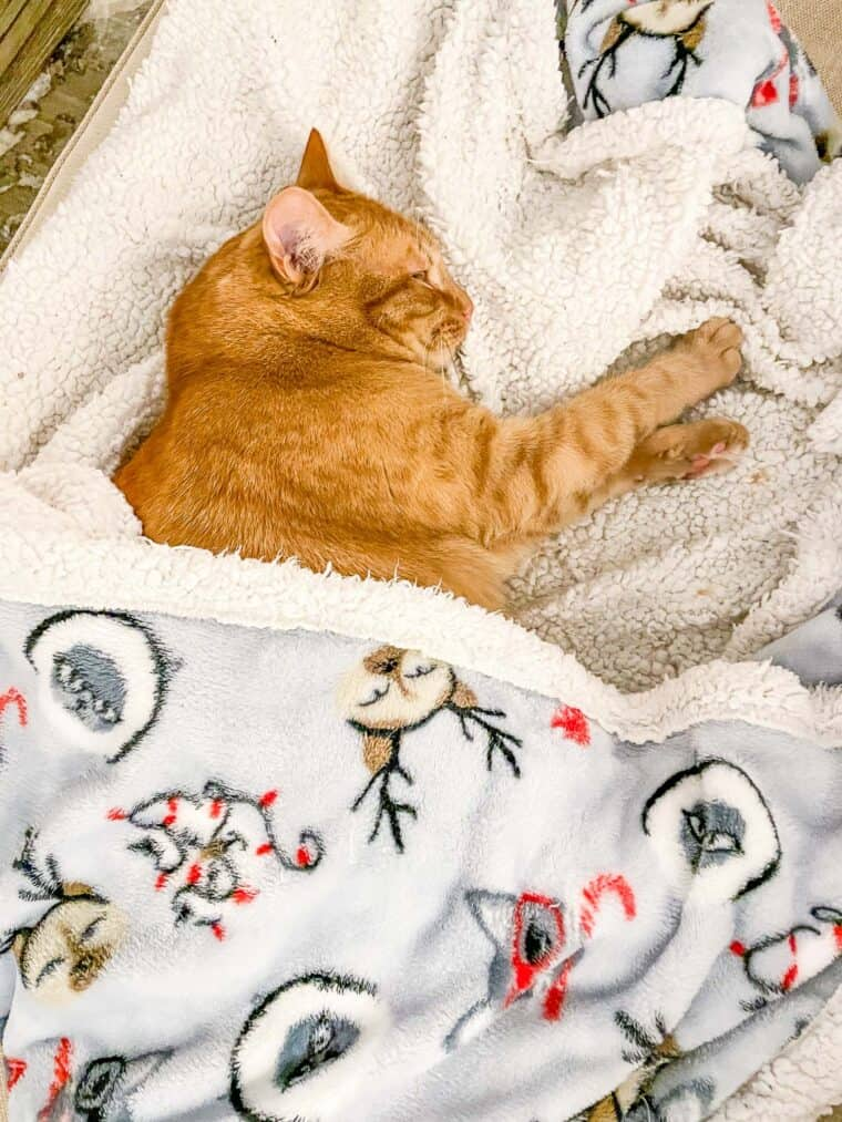 orange cat sleeping under a blanket