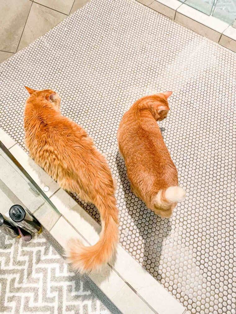 two cats in the shower