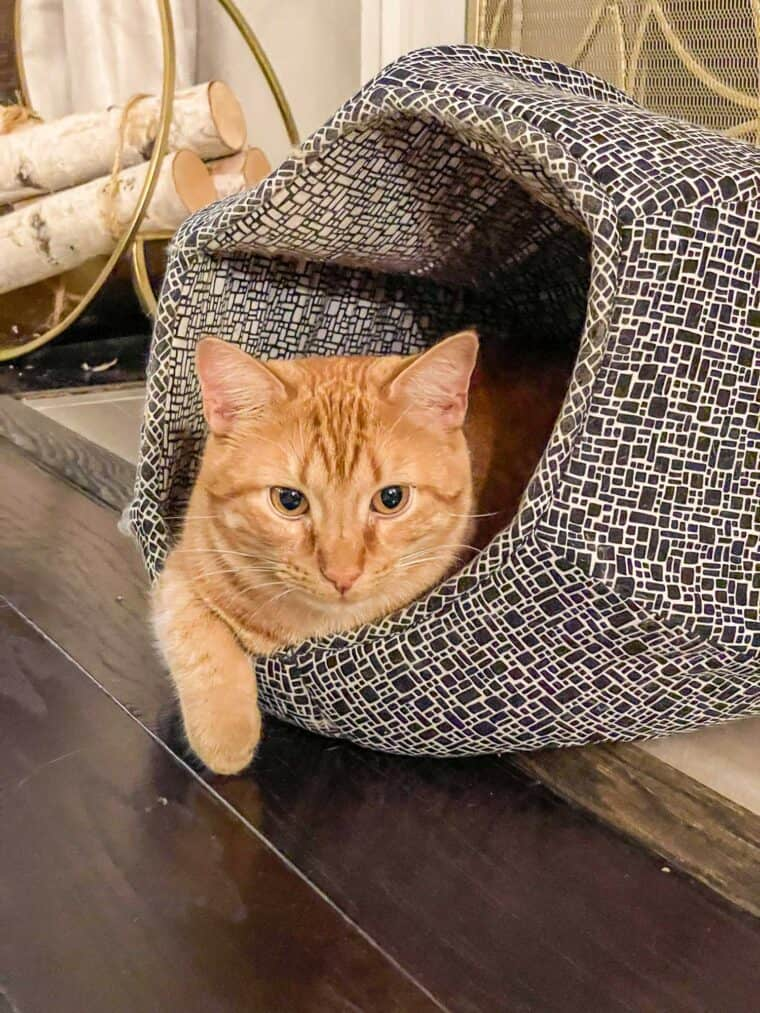 orange cat in cat ball bed