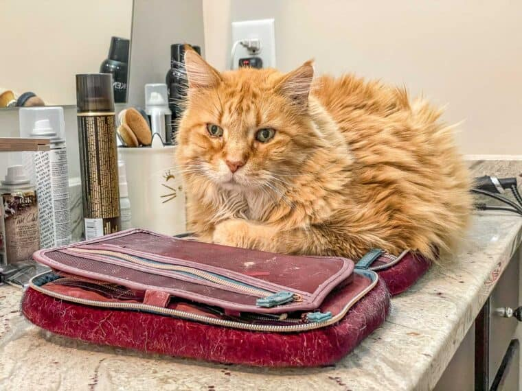 orange cat sitting on makeup bag