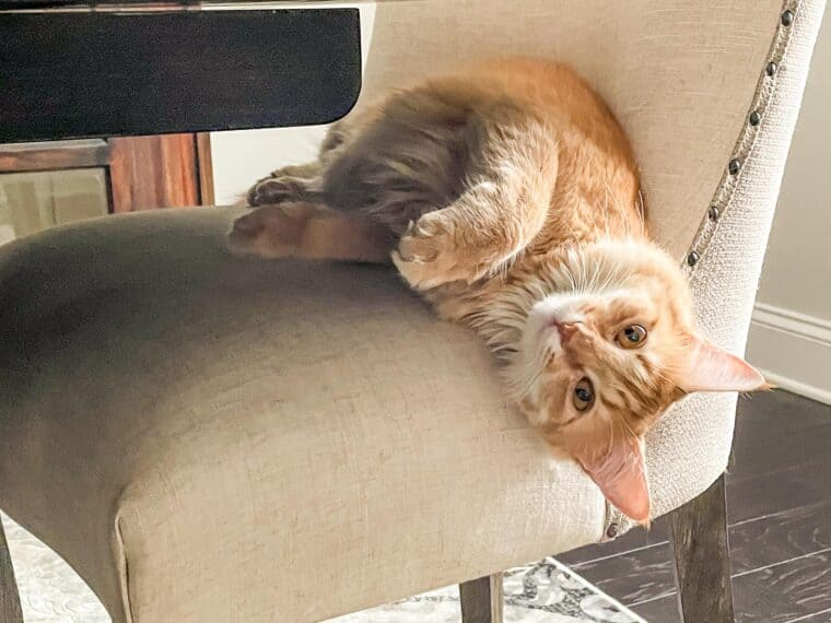 orange cat sleeping in a chair