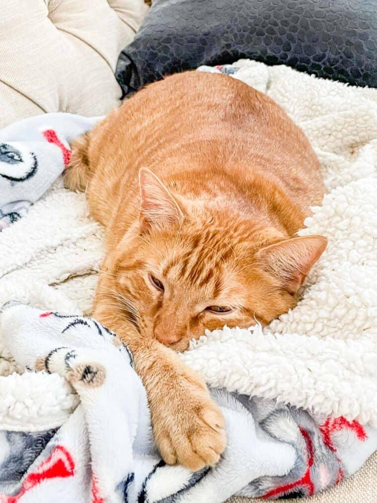 orange cat sleeping on a blanket