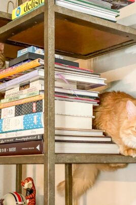 two orange cats on a bookshelf