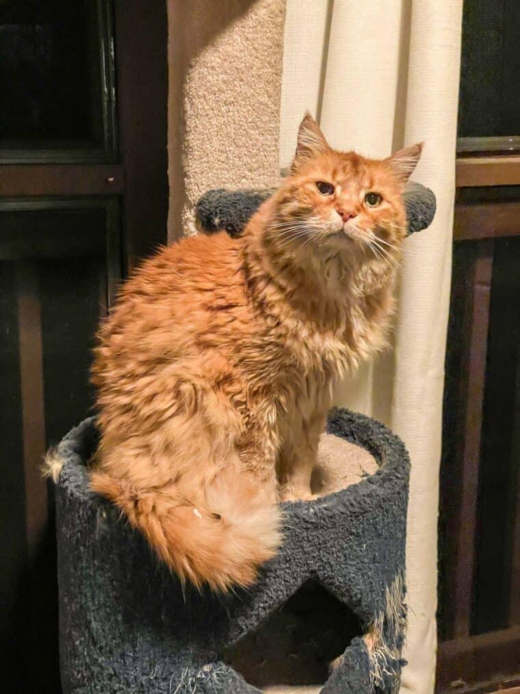 orange cat sitting on a cat tower