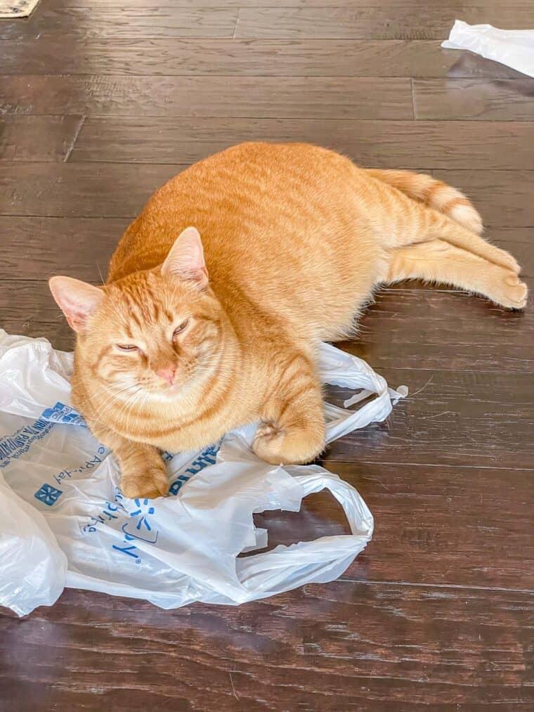 orange cat laying on a bag