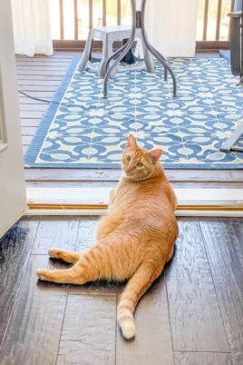 orange cat laying on the floor looking outside