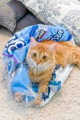 orange cat sitting on plastic packaging