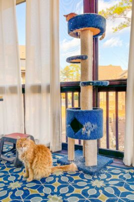 two orange cats on cat tower outside
