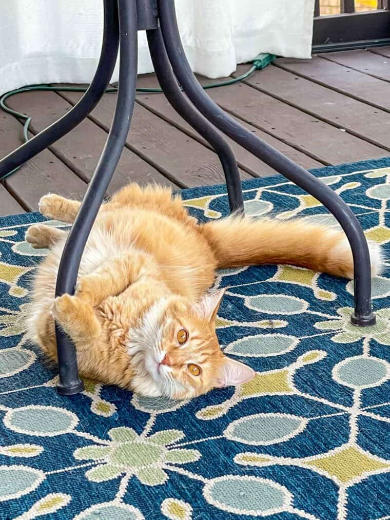 orange cat laying under a table outside
