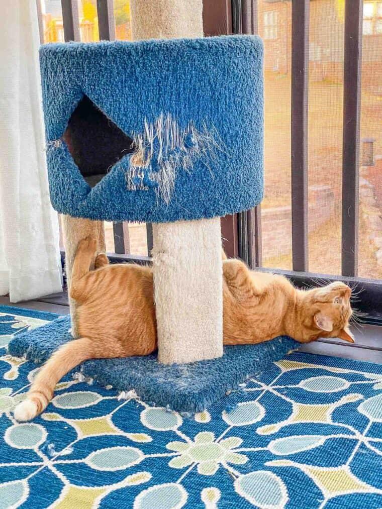 orange cat on its back under cat tower