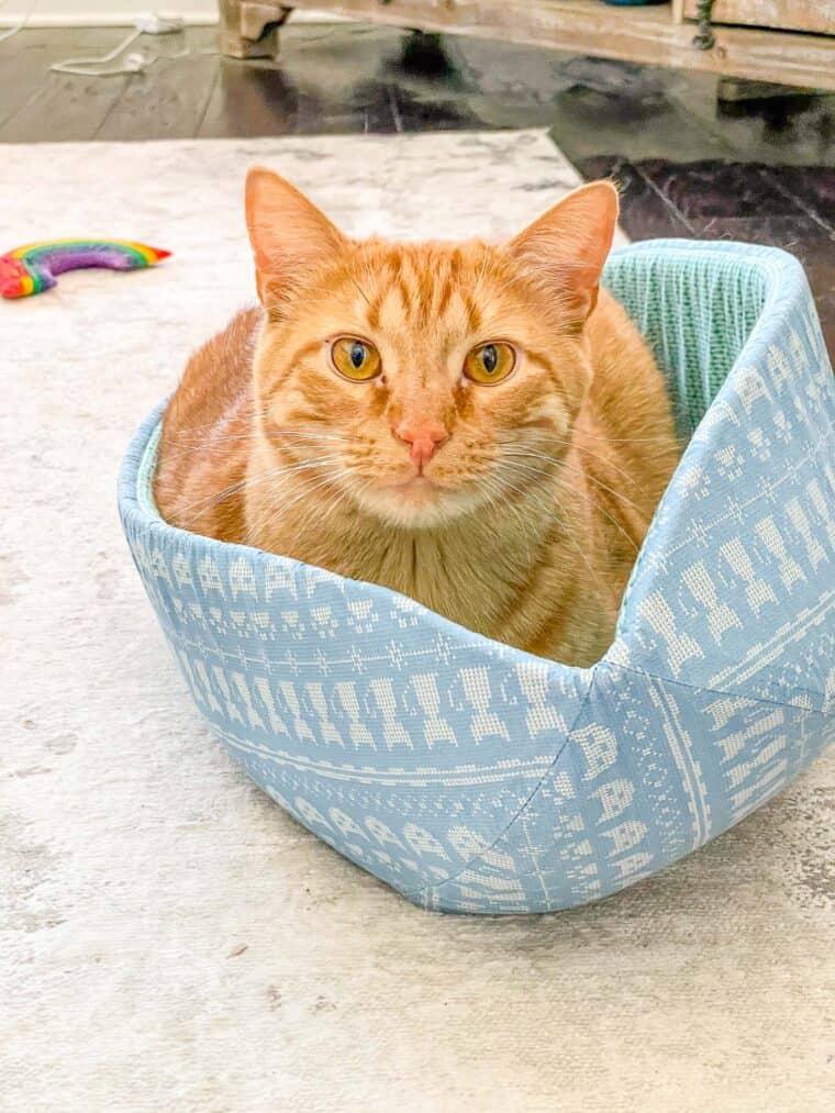 orange cat sitting in cat bed