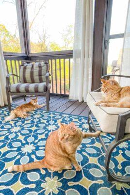 3 orange cats sitting on the deck