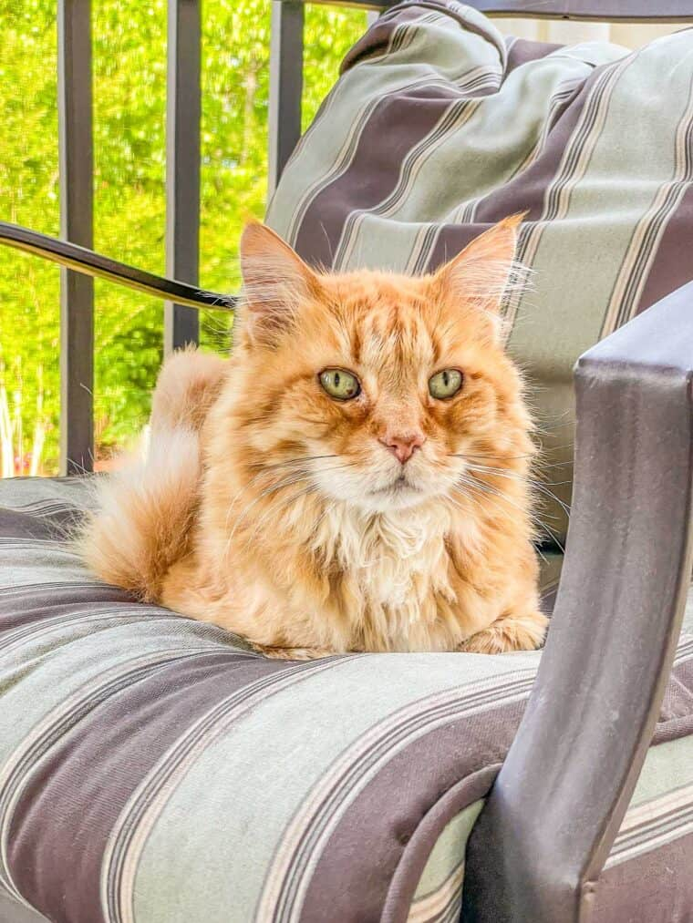 cat sitting on the chair