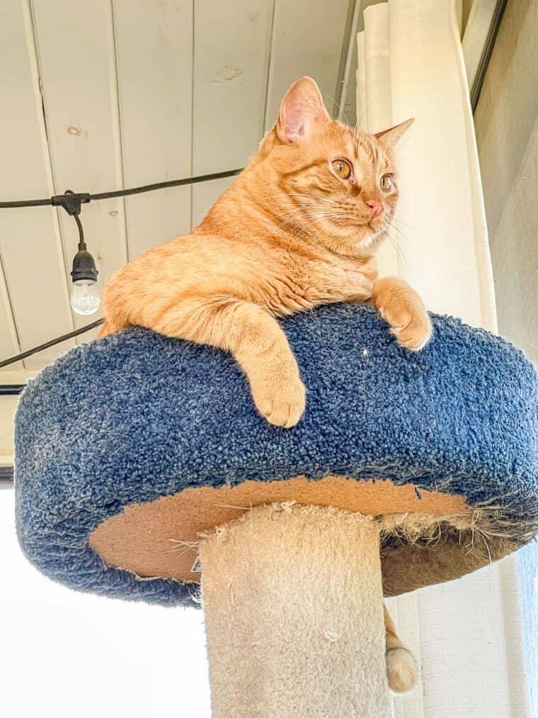orange cat in a cat tower