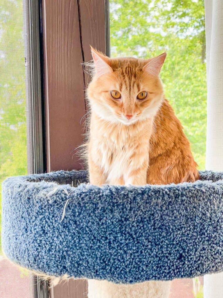 orange cat sitting in a cat tower