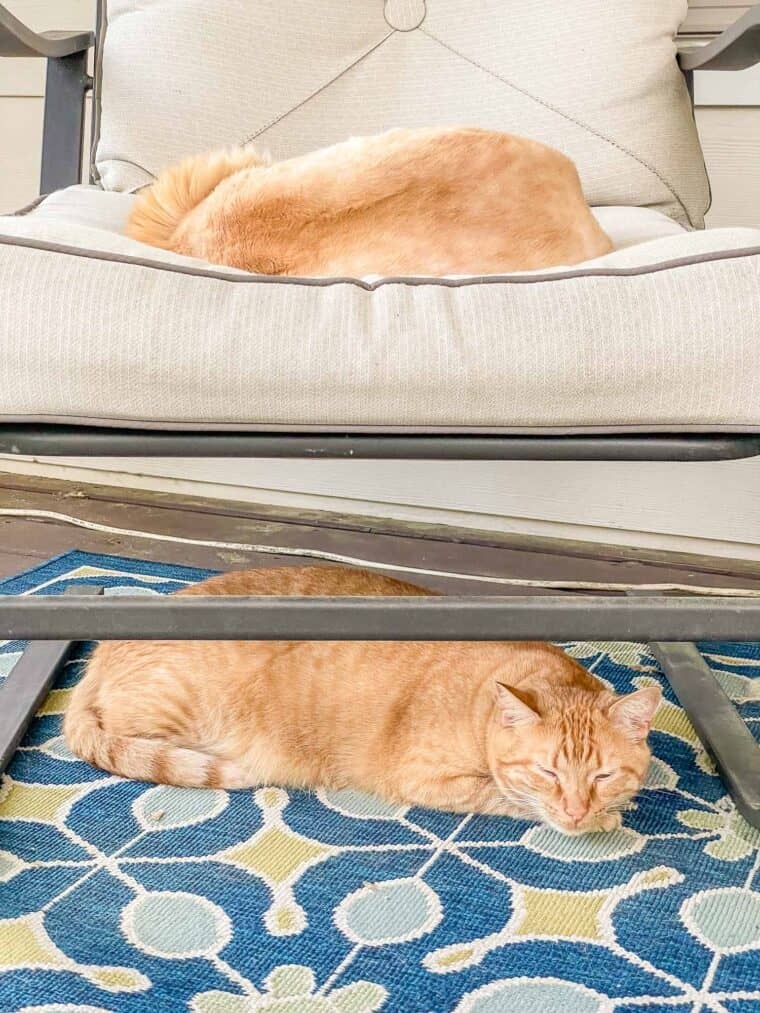 one orange cat sleeping in a chair and one orange cat sleeping under the chair