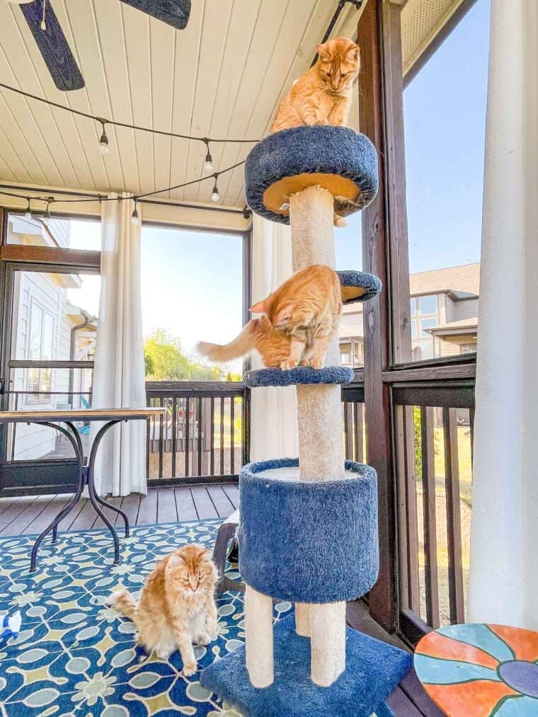 3 orange cats on a cat tower