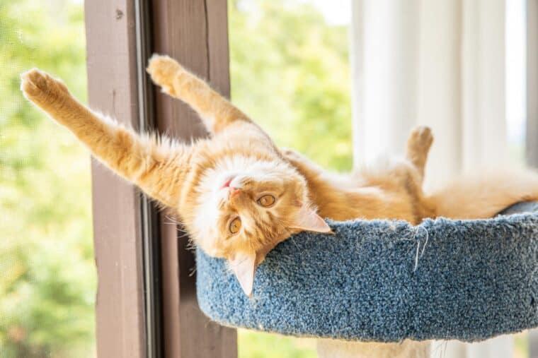 orange cat on cat tower