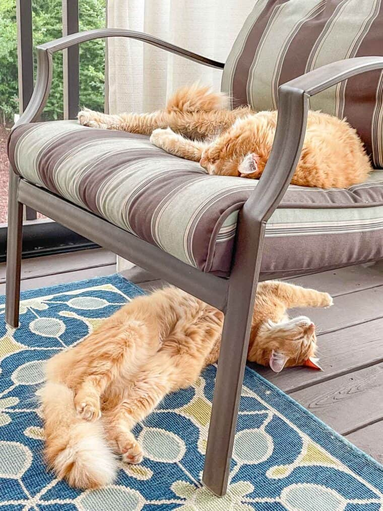 2 orange cats laying on the deck
