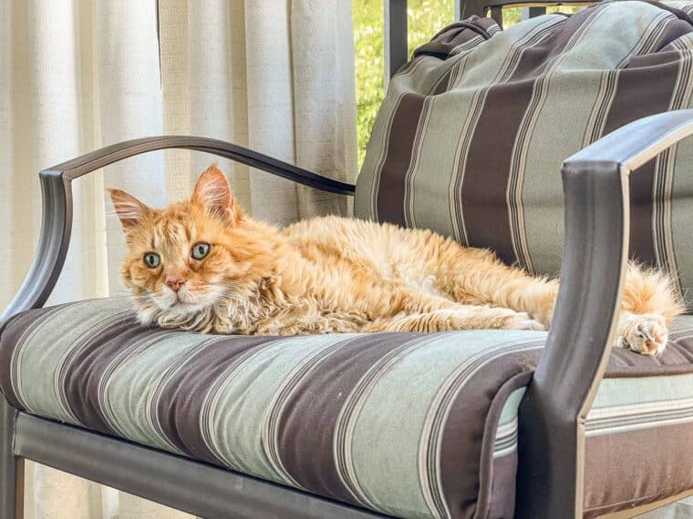 orange cat sitting in a chair