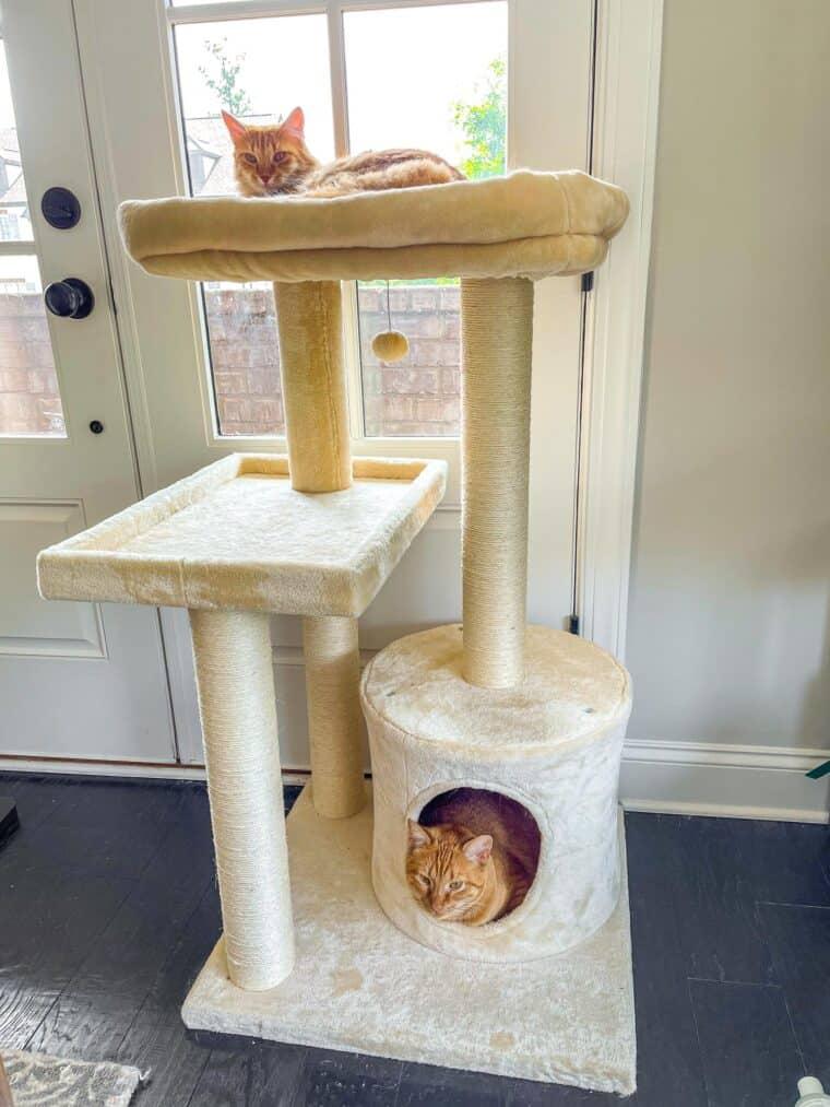 2 orange cats in a cat tower