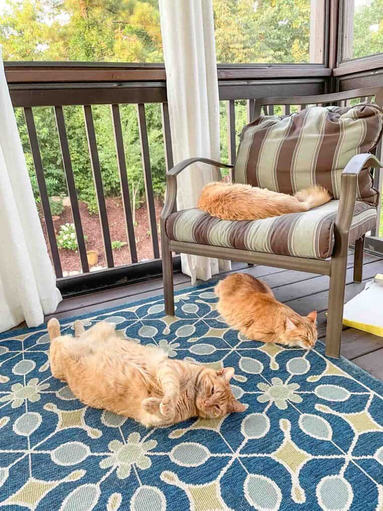 3 orange cats laying on the screened deck