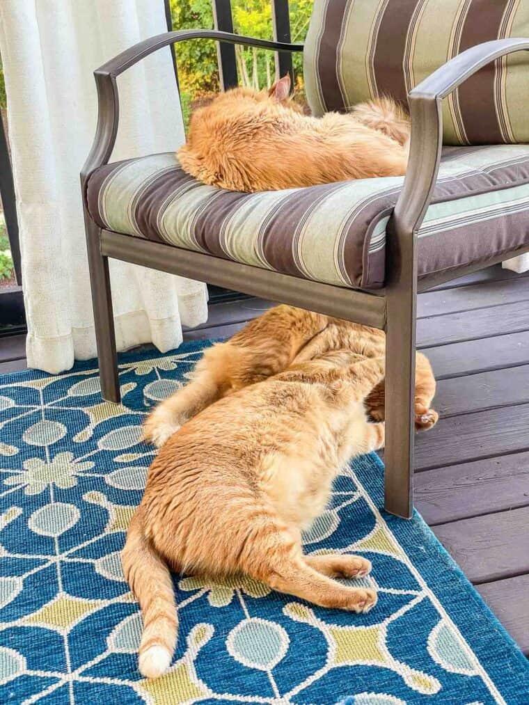 3 orange cats sleeping on the screened deck