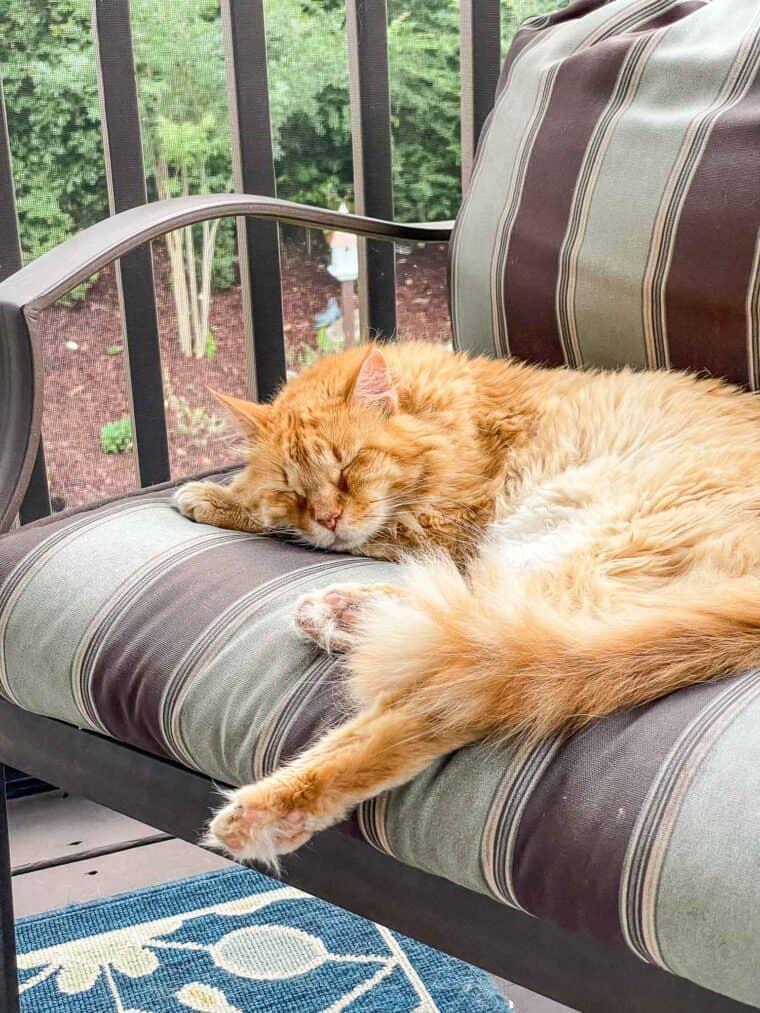 orange cat sleeping in a chair outside