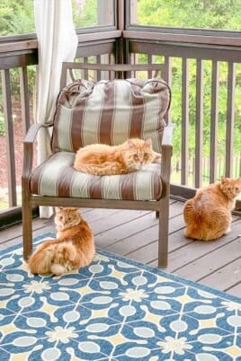 3 orange cats on the screened deck