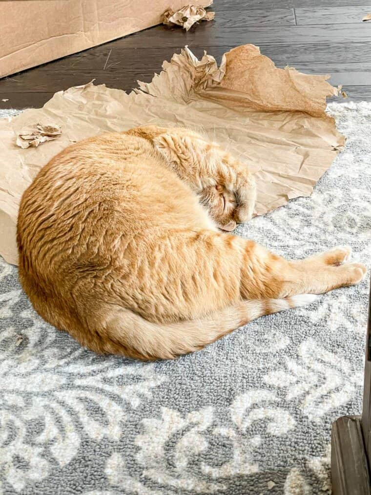 orange cat sleeping on a rug