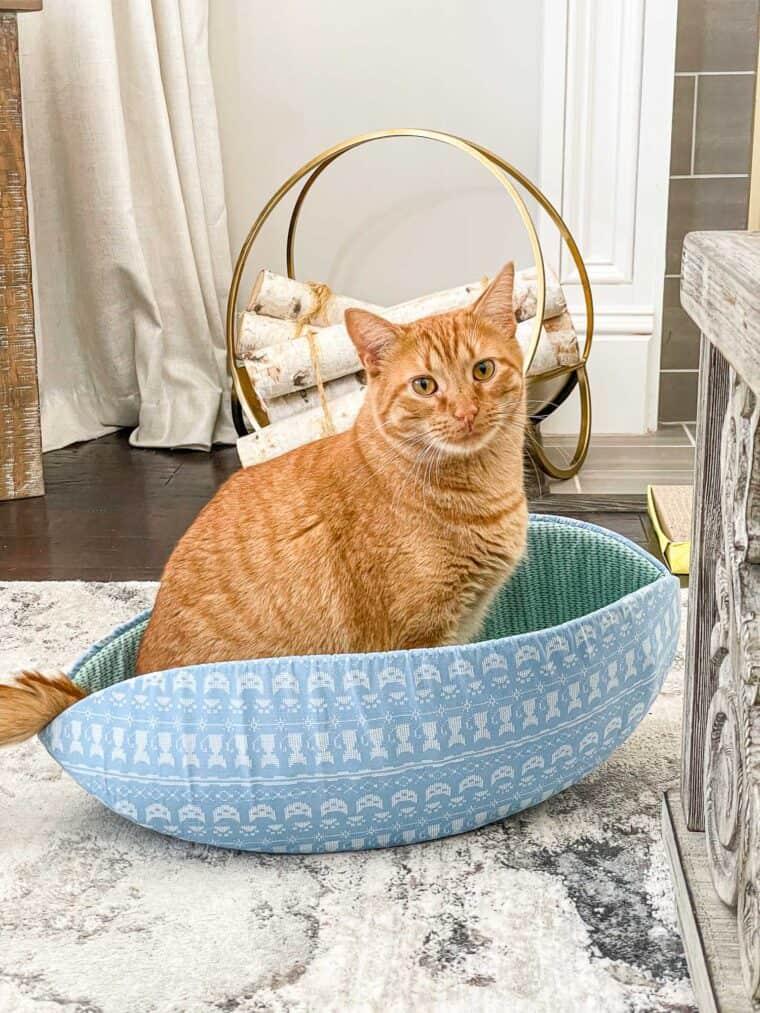 orange cat sitting in a blue cat bed