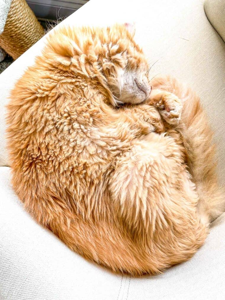 orange cat sleeping in a chair