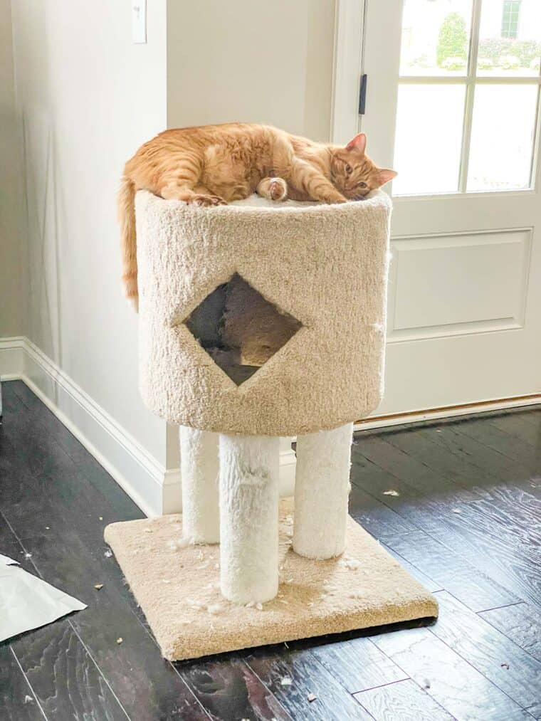 cat laying on a cat tower