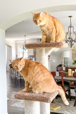 2 cats sitting on a cat tower