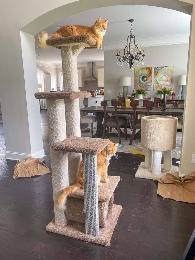 two cats sitting on the cat tower