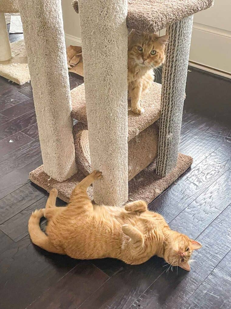 two cats playing on the cat tower