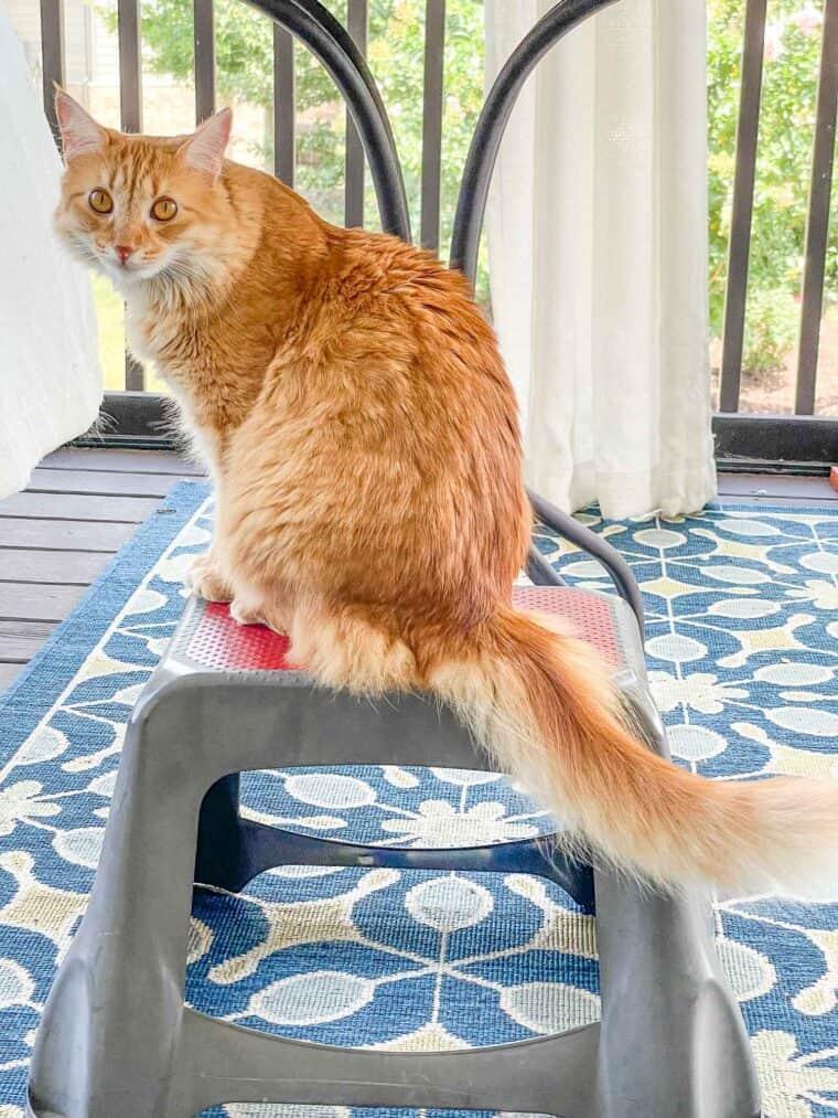 orange cat sitting on a stool