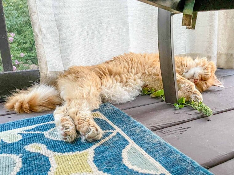 cat laying on the deck