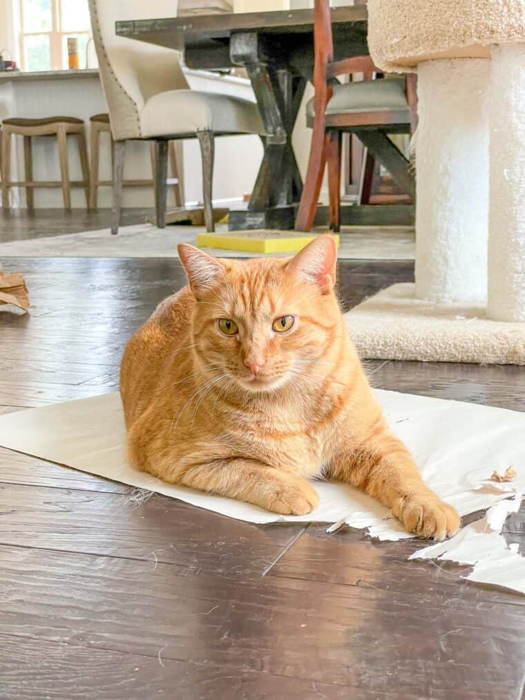 cat laying on paper on the floor